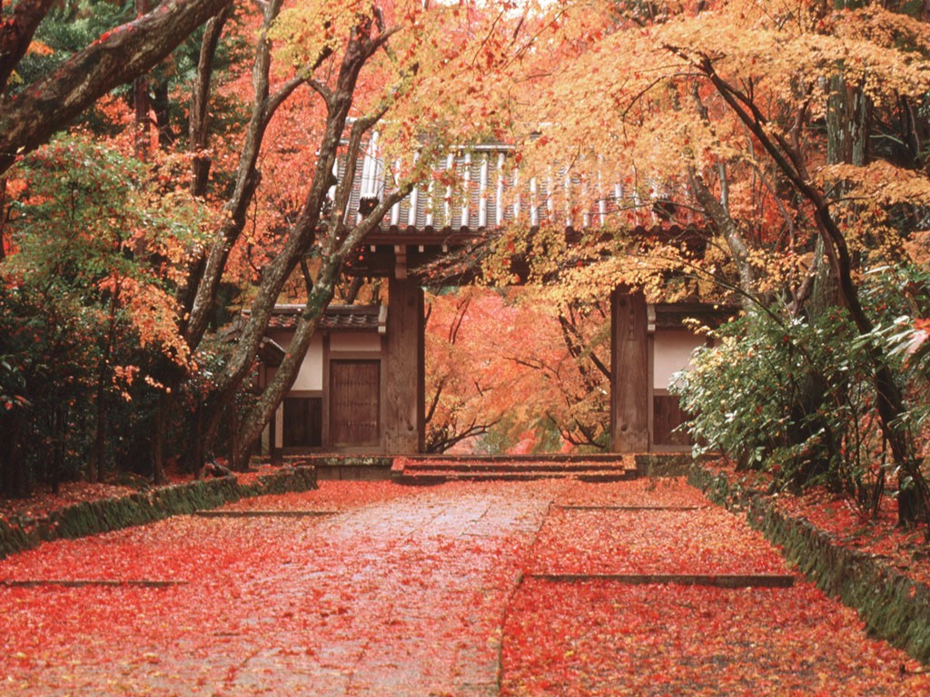 Image result for japan autumn