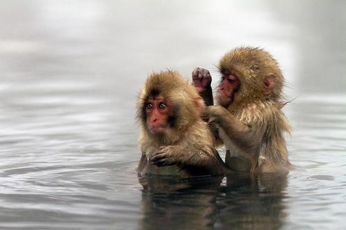 hot monkey love