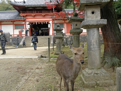 deer and temple