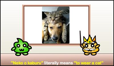wear a cat